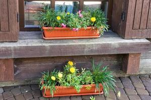 Blumen in Töpfen neben einem Fenster foto