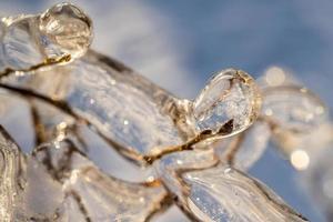 Nahaufnahme von Eiszapfen auf nackten Ästen foto