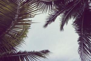 Kokosnuss-Plam-Baum mit Kopienraum am Himmel foto