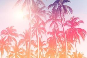 tropische Palmenkokosnussbäume auf Sonnenuntergangshimmelfackel und bokeh Naturhintergrund foto