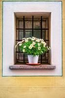 Topf mit den Blumen im Fenster foto