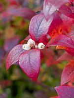 Herbstlaub und kleine Blüten foto