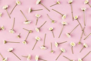 flach legen Blumen auf rosa Hintergrund foto