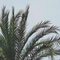 Palmenblätter und blauer Himmel in der Frühlingssaison foto