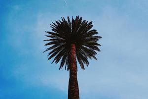 Palme und blauer Himmel in der Frühlingssaison foto