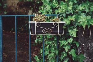 schöne Pflanzen auf der Straße foto