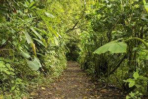 leerer Weg zusammen mit grünen Bäumen im Regenwald foto