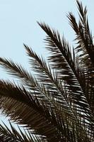 Palme und blauer Himmel foto