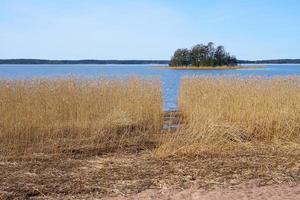 Trockenpflanzen an der Ostseeküste in Finnland im Frühjahr. foto