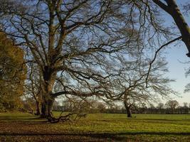 Winterbaum mit grünem Gras foto