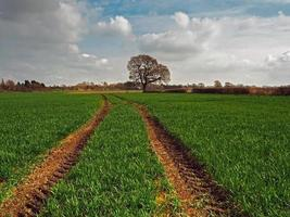 Traktorspuren durch ein bebautes Feld foto