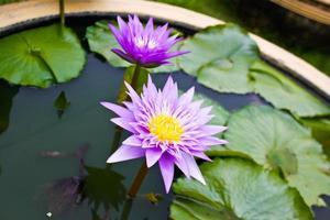 Lotusblumensymbol des Buddhismus foto