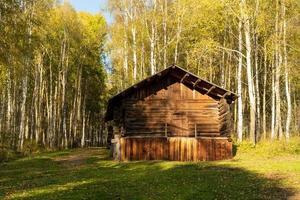 Hütte in einem Wald von Birken in Taltsy, Russland foto