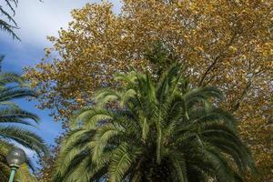 Palmen unter anderen Bäumen mit einem wolkigen blauen Himmel foto