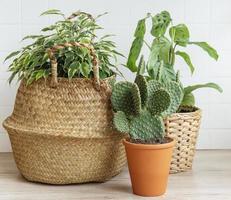 Zimmerpflanzen auf einem Tisch foto