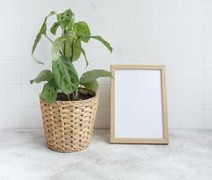 Zimmerpflanze mit leerem Rahmenmodell foto