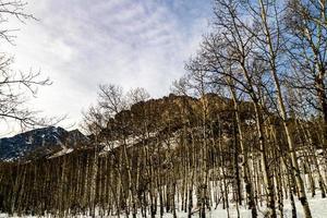 Blick auf Berge aus einem Wald foto