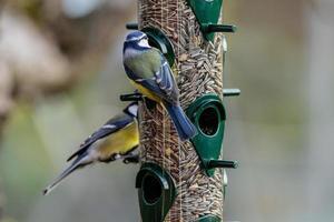 Nahaufnahme von Vögeln, die aus einem Futterautomaten fressen foto