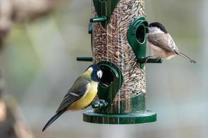 Nahaufnahme von Vögeln auf einem Vogelhäuschen foto