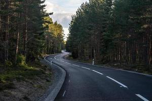 Straße durch einen Kiefernwald foto