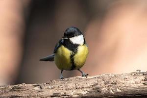 schwarzer und gelber Vogel foto