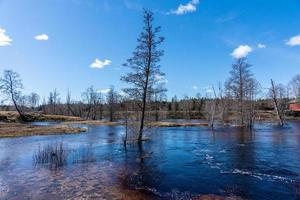 überflutete Landschaft und Bäume foto