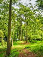 Weg durch hohe Bäume mit frischem Frühlingslaub foto
