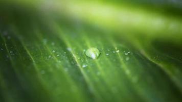 Makro-Wassertropfen mit hohem Winkel auf Blatt foto