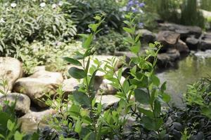 grüner Sommergarten des Resortäußeren foto