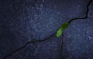 Schössling wächst aus einem Felsen foto