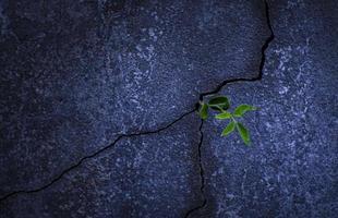 junge Pflanze wächst aus einem Felsen foto