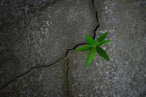 junge Baumpflanze, die durch Beton wächst foto