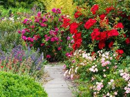 helle Blumenanzeige in einem Sommergarten foto