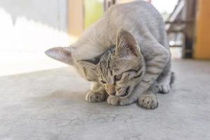zwei kleine Kätzchen spielen süß foto