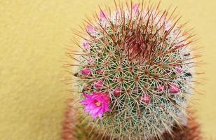 Nahaufnahme eines Kaktus foto