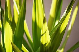 grünes Blatt Nahaufnahme Fotografie foto