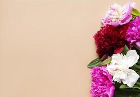 rosa Pfingstrosenblüten als Grenze foto