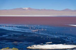 bunte Laguna Colorado auf dem Plateau Altiplano in Bolivien foto
