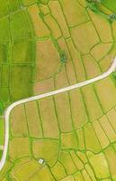 Luftaufnahme des grünen und gelben Reisfeldes foto