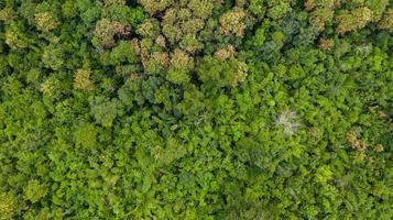 Luft Draufsicht der Waldbeschaffenheit Hintergrundansicht von oben foto