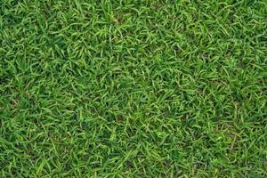 grüner Grashintergrund foto