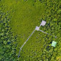 Luftansicht der Mangrovenholzbrücke foto