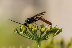 Nahaufnahme einer orangefarbenen Wespe foto