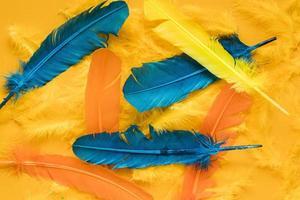 Draufsicht mehrfarbige Karnevalsfedern foto