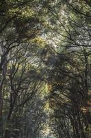 Baumblätter im Wald foto