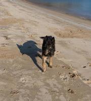 Porträt eines schwarzen Hundes auf einem Strandhintergrund foto