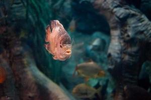 Fischen Sie die Weltmeere in einem großen Aquarium foto