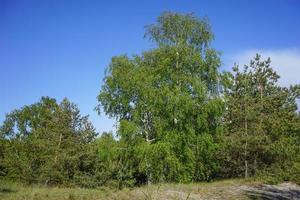 Naturlandschaft mit schönen Bäumen gegen den Himmel foto