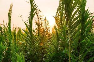Farnblätter und Morgensonne foto