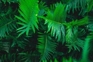 Farngarten und Farnbaumhintergrund foto